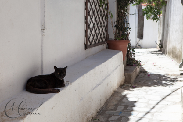 Cat in an alley, Skiathos