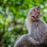 Sacred Monkey Forest Sanctuary, Bali pt 2